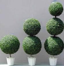 Real Topiary Trees For Sale - silk bonsai trees u0026 topiaies make be leaves