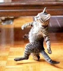 Diabetes Cat Meme - cat with diabetes walking funny funny pics story