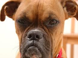 Annoyed Dog Meme - 11 comments that make dog owners cringe barkpost