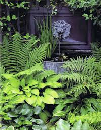 planting bed under cherry tree hostas and ferns what do do