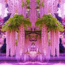 wisteria home decor глициния photography pinterest