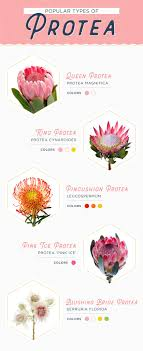 protea flower 11 protea ideas for your wedding ftd