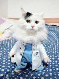 Cat Suit Meme - cat dog clothes s xl dog doctor suit summer pet puppy cat doctor