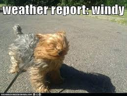 Funny Weather Memes - windy day quotes photos fifteen funniest windy weather memes