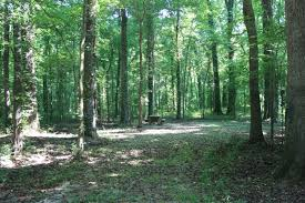 Mississippi forest images Delta national forest a mississippi natlforest located near yazoo jpg