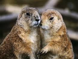 78 love groundhogs images ground hog