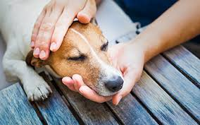 pet euthanasia pet hospice in home euthanasia loving paws vet care