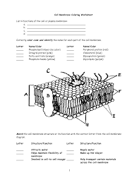 best pretty cell membrane coloring worksheet answer key pages free