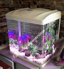 Aquarium For Home Decoration Nairobi Aquarium Store Pet Store Nairobi Kenya 29 Reviews