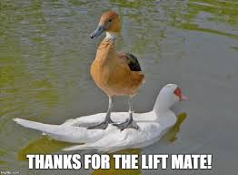 Funny Duck Meme - thanks for the lift mate imgflip