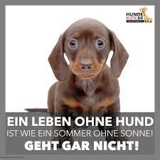 lustige hundesprüche ein leben ohne hund ein vierbeiner namens minerva
