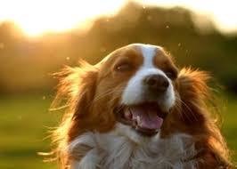 What Causes Dogs To Go Blind Is Your Dog Going Blind 2 Ways To Tell