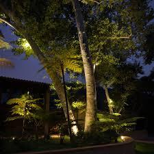 landscape tree lighting christmas lights decoration