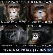 Gorilla Warfare Meme - 25 best memes about gorilla gorilla memes