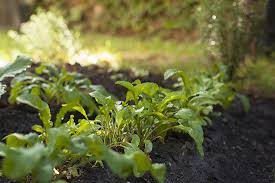 grow shade loving vegetables and fruits organic gardening
