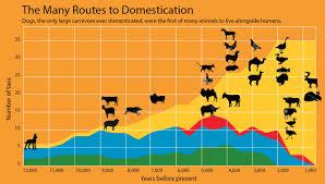 november birth animal the origins of dogs discovermagazine com