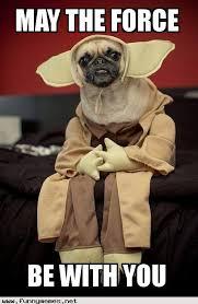 Star Wars Funny Memes - star wars pug funny memes