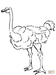ostrich coloring page kids coloring europe travel guides com