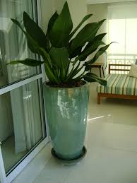 Home Interior Plants by Green Ideas For Your Home Interiors Decorating With Indoor Plants