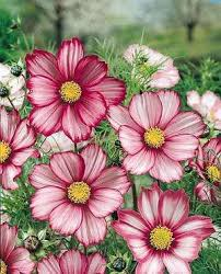 awesome looking flowers the 25 best flowers ideas on pinterest pretty flowers flower
