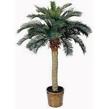 tree ebay