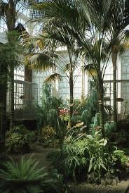 35 best lovely indoor garden images on pinterest indoor plants