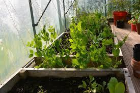 Mulching Vegetable Garden by Mulching My Shetland Garden