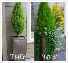 Shrubs For Patio Pots Tall Potted Plants In Front Yard Never Considered That Before