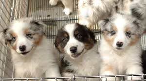 Pet New California Law Requires Pet Stores Sell Only Rescue Animals