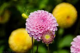 List Of Botanical Gardens The 15 Best Botanical Gardens In California Proflowers