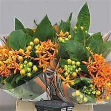 Flowers Wholesale Seasonal Flowers Wholesale Flowers Uk Wedding Flowers