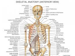 Anatomy Of Human Body Pdf Bones In Neck Diagram Human Anatomy For The Artist May 2013