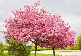 types of ornamental trees to use in landscaping chambersville