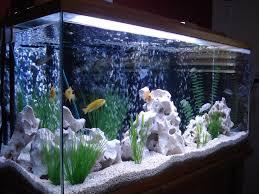 Beautiful Home Fish Tanks by Best 20 Cichlid Aquarium Ideas On Pinterest Cichlids African
