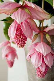 Flowers Near Me - best 25 exotic flowers ideas on pinterest exotic plants