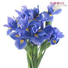 iris flowers wholesale irises iris flowers for diy weddings