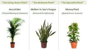good inside plants doon gardening society
