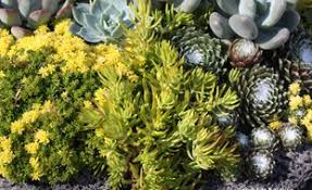 succulent gardens garden design