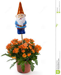 Lawn Gnome by Garden Gnome With Flowers Royalty Free Stock Photos Image 32352298