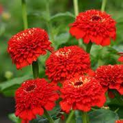 flower plants flower seed flowering seeds and plants for every garden