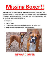 boxer dog 2016 calendar boxer dog missing from westborough neighborhood everything south