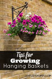 best 25 hanging flower baskets ideas on pinterest flower