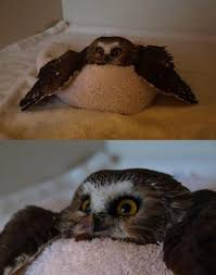 Funny Owl Meme - owls different memes wet funny shram kiev ua