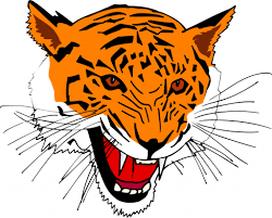 cartoon drawings of tigers how to draw a tiger easy stepstep