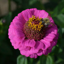 Flowers Bees Pollinate - plants for bees