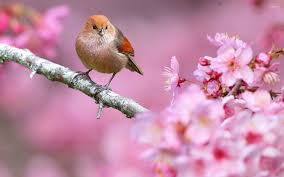 small bird in a tree wallpaper wallpapers 46883