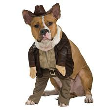 Funny Animal Halloween Costumes 33 Animal Costumes Images Animals Animal