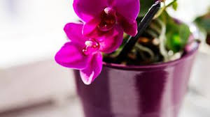 pflanzen für schlafzimmer pflanzen fürs schlafzimmer darauf sollten sie achten