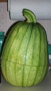 squash pumpkin cucumber watermelon cross pollination explanation