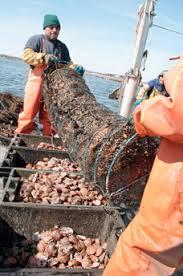 fish farming cqr